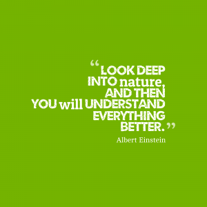 Look-deep-into-nature-and__quotes-by-Albert-Einstein-73